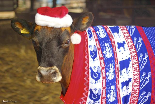 A pulóverét kimondottan neki tervezték.