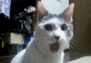 shocked-cat.gif