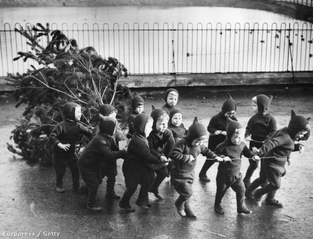 1938. december 10.: árva gyerekek húzzák karácsonyfájukat a Leytonstone-i árvaház felé Londonban.