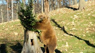 Farkas, medve hiúz, sakál és kisragadozók várják a Budakeszi Vadasparkban
