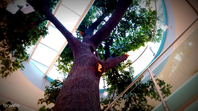 Hatalmas fa a Természettudományi pavilonban