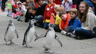 Már a pingvinek is rákaptak az IPadre