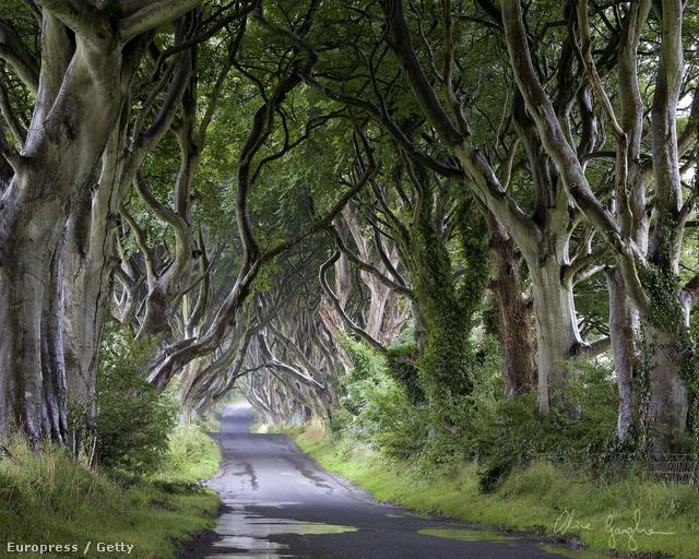 Dark Hedges, Észak-Írország