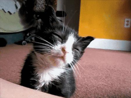 kittensleep.gif