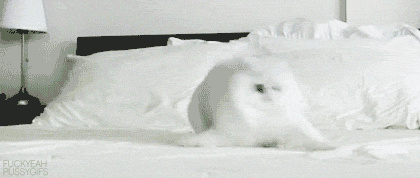 scared-bed-cat1.gif