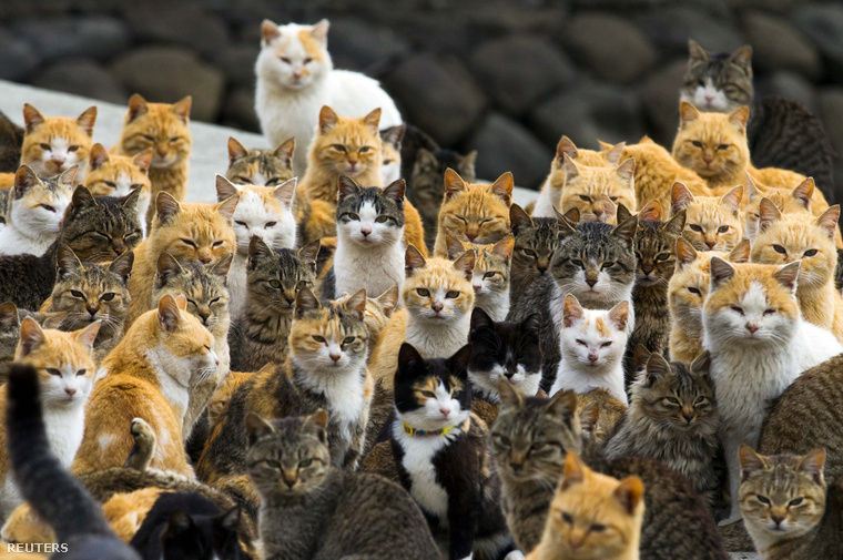 Azt eddig is tudtuk, hogy igazából a világuralom a cél, és ezek a japán cicák elég jól állnak a küzdelemben.