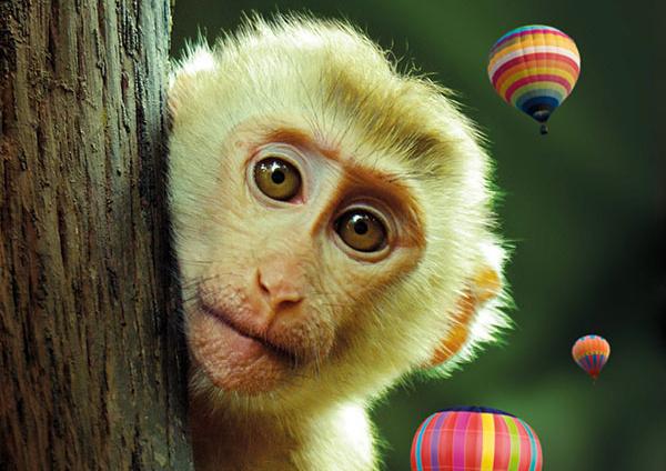 Kaland a dzsungelben plakat
