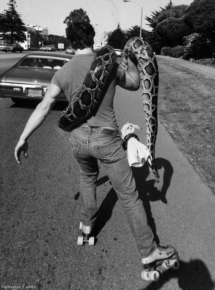 Van, aki kígyóra vágyik