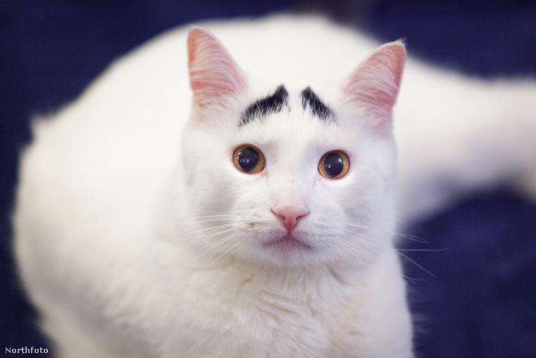 Ez a macska itt Sam