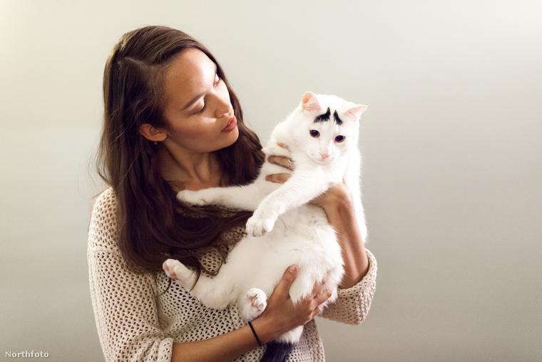 Fontos megjegyezni, hogy nem ő az egyetlen ilyen macska: ez a Bella nevű állat diszkrétebb szemöldökkel bír,