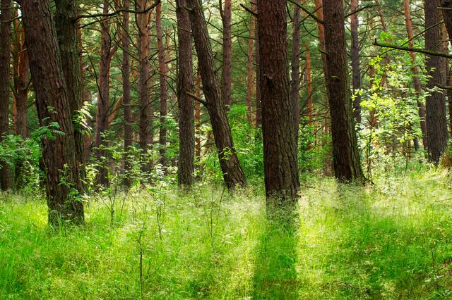 Ne a fáktól, az aljnövényzettől tartson!