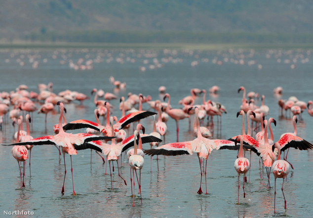 Nakuru-tó