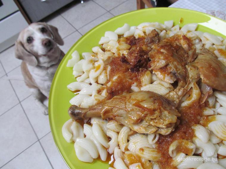 Csirkepaprikást csak akkor adjon a kutyájának, ha nincs benne csont, meg erős fűszerek
