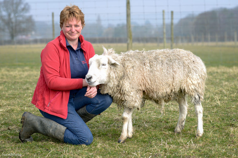 tk3s swns dolly sheep 02
