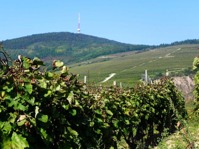 Kopasz-hegy, Tokaji történelmi borvidék