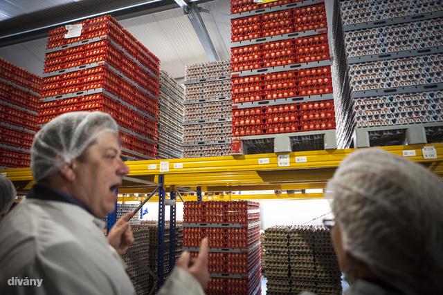 Egy raklapon 8640 tojás fér el. Ebben a raktárban nagyon sok raklapnyi tojás van.
