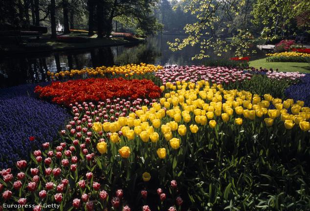 Keukenhof Gardens, Lisse, Hollandia