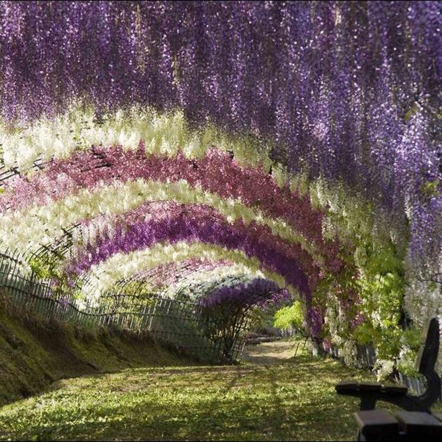 Kawachi Fuji Gardens, Japán
