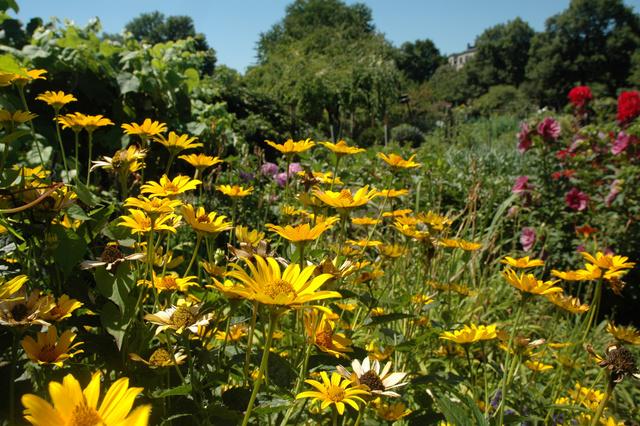Közösségi kert virágokkal