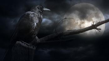 Régen azt hitték, a madarak a Holdra mennek