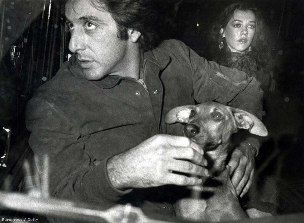 Al Pacinót Hollywood örök agglegényének szokás tartani, mivel a hálószobatitkairól jóformán semmit sem tudni. A sztár párkapcsolatai mindig rövid ideig tartottak.  Ezen az 1982-es képen is inkább a kutyájával foglalkozik a New York-i Regency Hotel teraszán, ahelyett, hogy a csajokat bámulná.