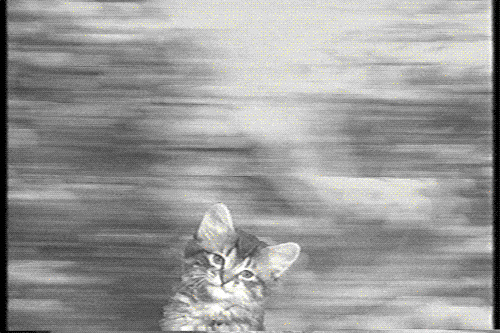 cat.gif
