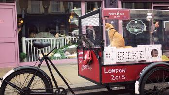 Ezzel a luxus macskaszállítóval bringázott át valaki Amszterdamból Londonba