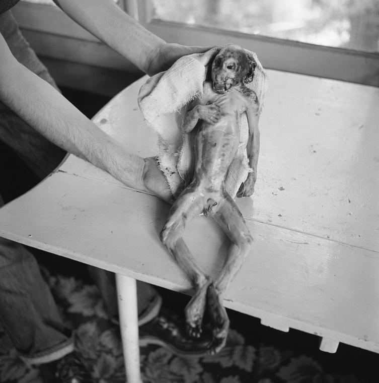 1953-ra jutott egy ufóhamisítási botrány is: két atlantai borbély, Edward Watters és Tom Wilson fogtak egy döglött rhesusmajmot, levágták a farkát, leszedték a szőrét, ételfestékkel bezöldítették, aztán szóltak a rendőrségnek, hogy ufókat láttak