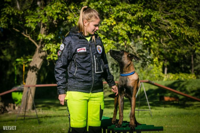 Merthogy még elég kicsik és még csak most tanulják azokat a speciális trükköket, amitől akár a világ legjobb mentőkutyái lehetnek.                         Tucker egy 5 hónapos belga juhászkutya és kiképzői Csehországig utaztak érte.