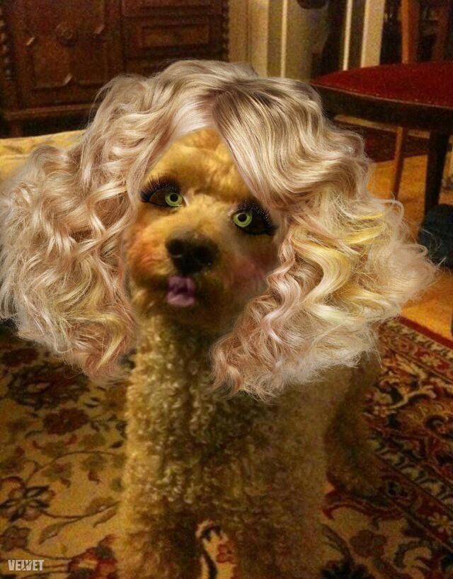 ...de miért ne öltözhetne néha Dolly Partonnak?