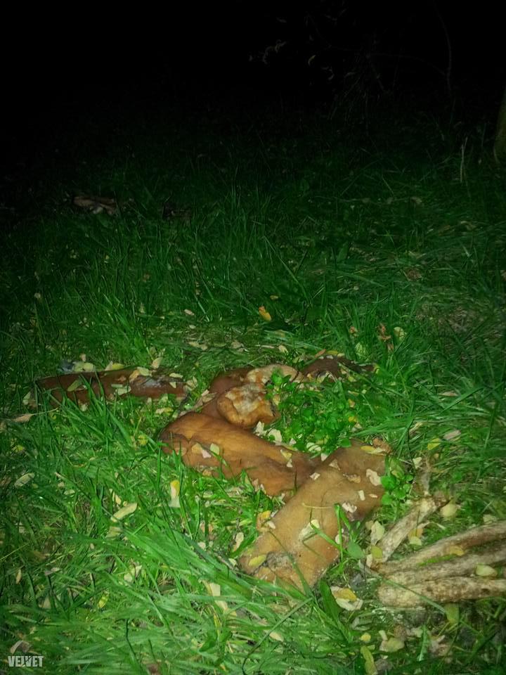 Az utolsó képünk a plusz egy, az is megtörtént ugyanis a héten, hogy valaki rengeteg szalonnát hagyott el Csepelen a gyepen