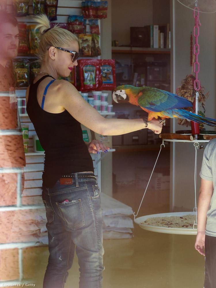A papagáj újra