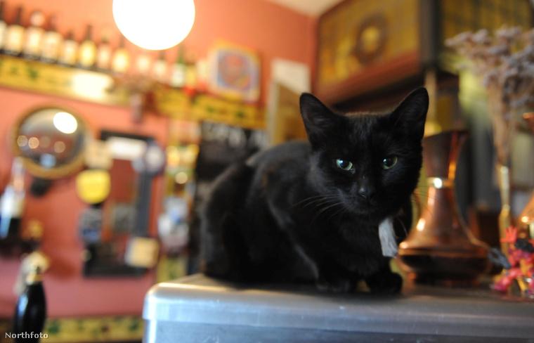 Ne legyen babonás, a fekete macskák is remek ivópajtások tudnak lenni
