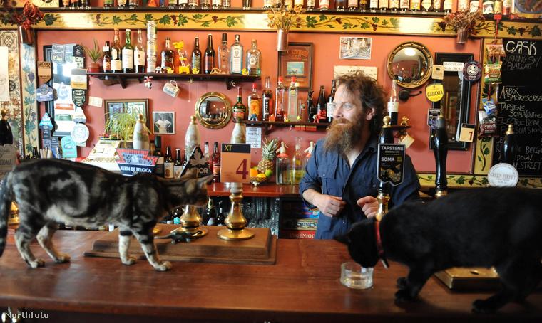 Nemcsak macskákból, italokból is van választék, hiszen egy pubról van szó