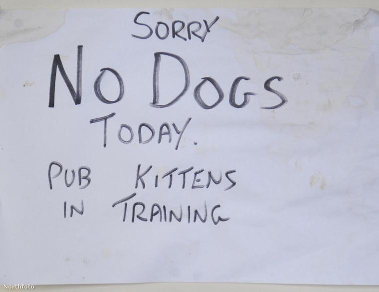 Ha éppen beszoktatás van, akkor a kutyáknak kint kell maradniuk