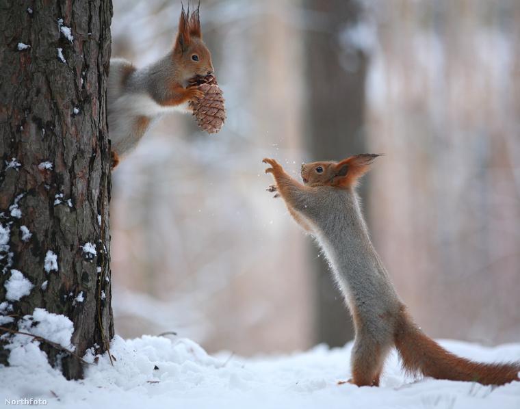 Csakhogy miközben falatozott, odajött egy barátja, és enni kért.