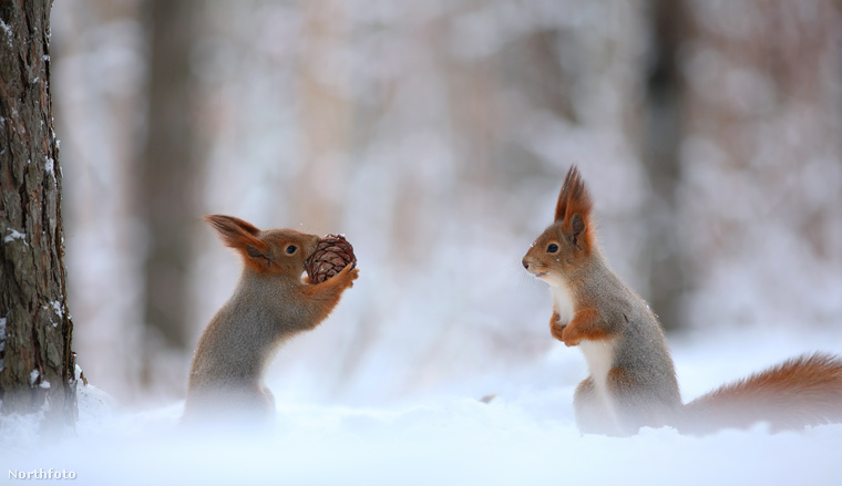 A mókuska pedig örült, mert látta, hogy ez jó