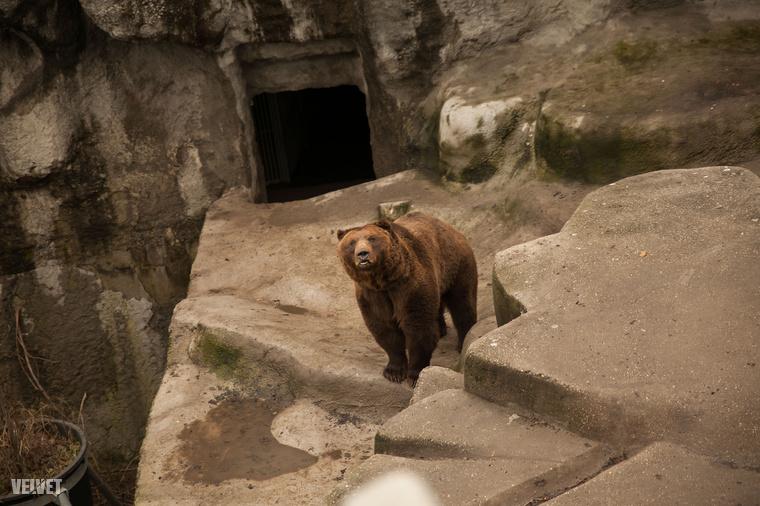 Ezen a napon a medvék határoznak az elkövetkezendő hetek időjárásáról