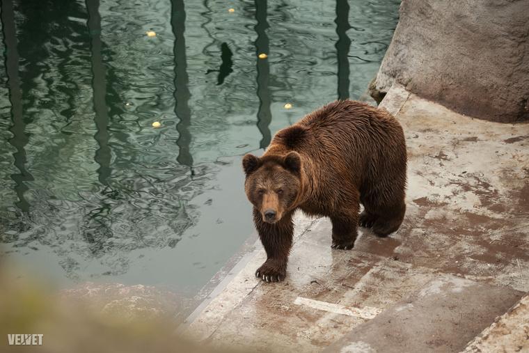 A Fővárosi Állat- és Növénykertben Romulus és Tibor döntött