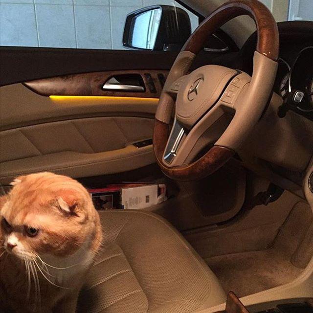 Szóval egy Mercedesben ücsörgő skót lógófülű egészen uncsi
