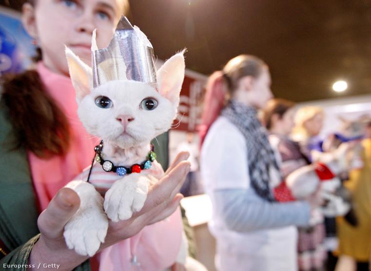 Egyébként 30 különböző fajta macskát mutattak be