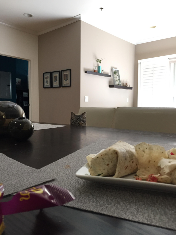 Macska ott ül és néz