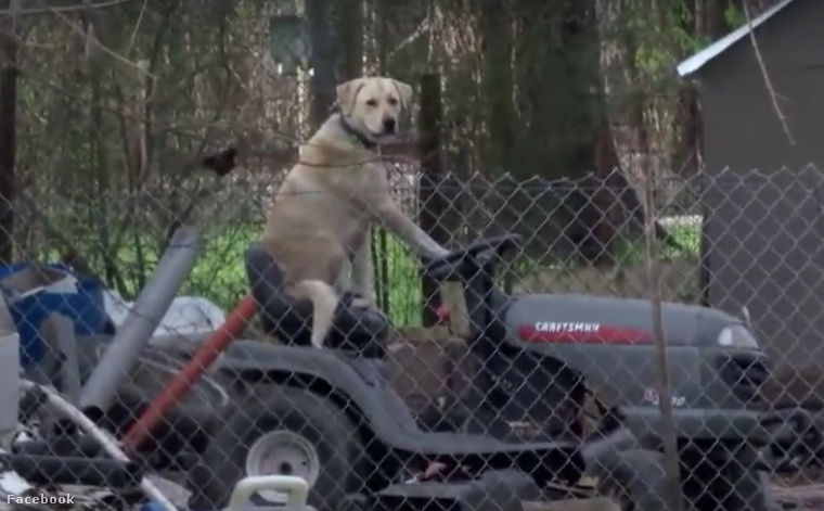 Texasban tornádó tombolt, de a helyszíni riport sztárja ez a fűnyíró traktoron lazuló kutya lett.