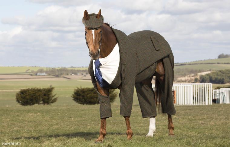 Mielőtt az utóbbira rátérnénk, meg kell nézni újra az öltönyös lovat!
