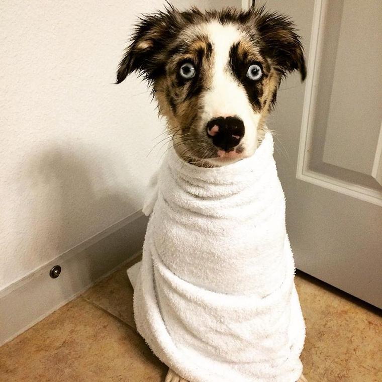 Ezzel a kutyával nem történt semmi, csak megfürdették