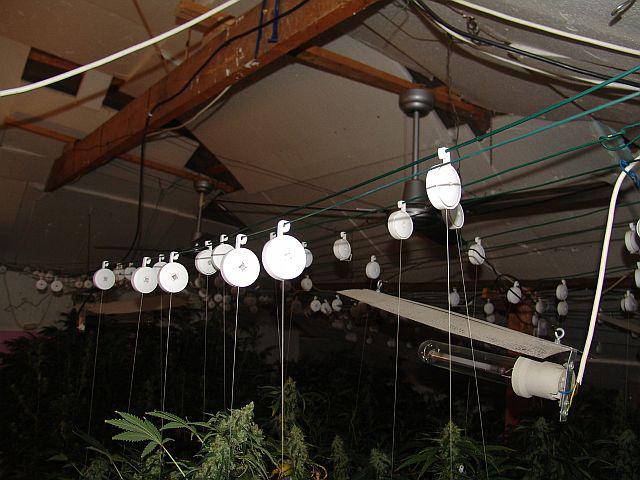 A helyszíni szemle során a nyomozók nagy mennyiségben foglaltak le leszedett leveleket, levél nélküli növényi szárakat, levágott tápkockás és cserepes növényi töveket