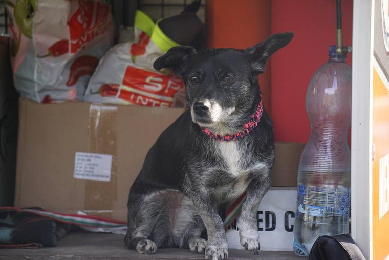 Pedig Jolán mindent megtett, hogy összezavarja az újoncokat.(Az volt a feladata, hogy a vizsga alatt szekírozza a kutyákat.)