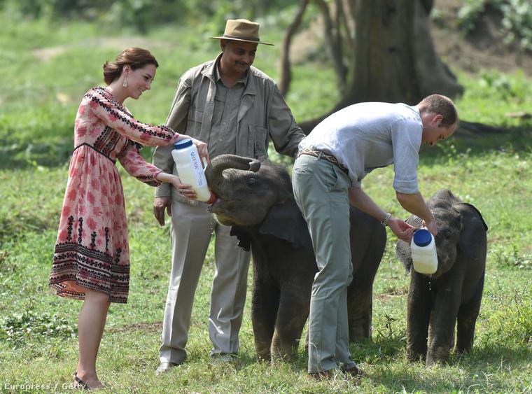 Sőt, azt is tudhatják, hogy elefántborjakat itatnak, ismerkednek a helyi kultúrával, és minden arra alkalmas helyen leróják tiszteletüket