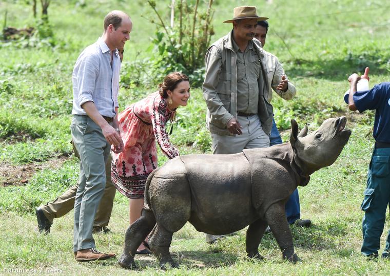 meg akar simogatni egy ifjú rinocéroszt, de az inkább elkocog.Azt hihetnék, csak az állatok közelében érik őket vicces élmények.