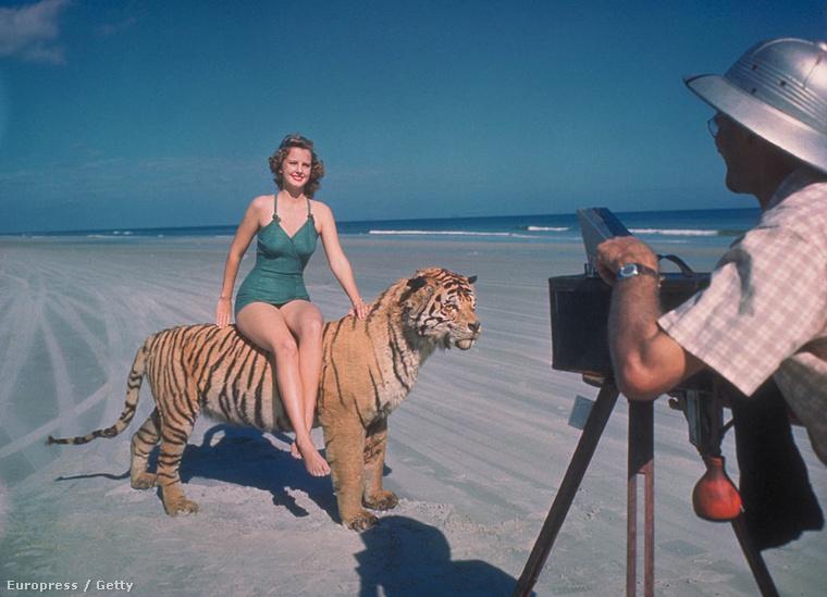 A kitömött tigrist nem sikerült meggyőzni a helyzet szükségességéről